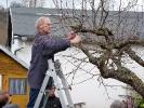 Obstbaumschnitt im KGV Saalestrand_10