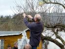 Obstbaumschnitt im KGV Saalestrand_8